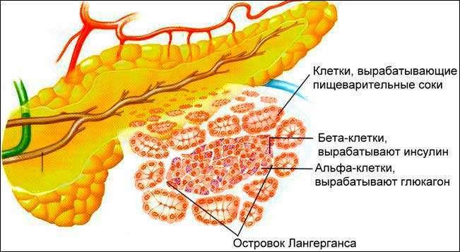 Пищеварительные расстройства клетки
