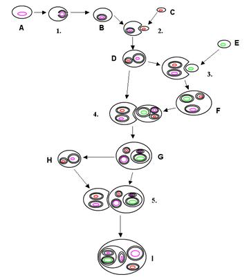eksport-u-prokariotov-i-proishozhdenie-eukarioticheskih-kletok