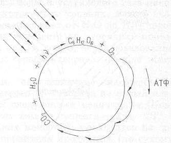 gruppovoj-perenos-vtoroj-zolotoj-energeticheskij-mehanizm-zhizni