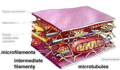 mikrotrabekuly