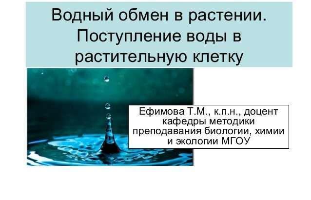 postuplenie-veshhestv-v-rastitelnuyu-kletochku