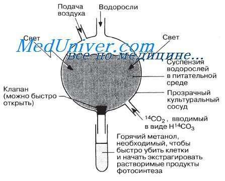 temnovye-reaktsii